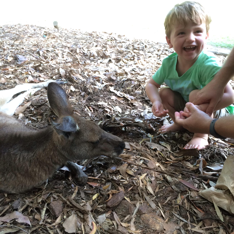 Australia Zoo Kangaroo